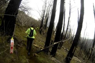 Durch die verbrannten Wälder