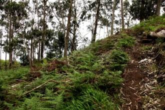 In den Wälder Madeira's