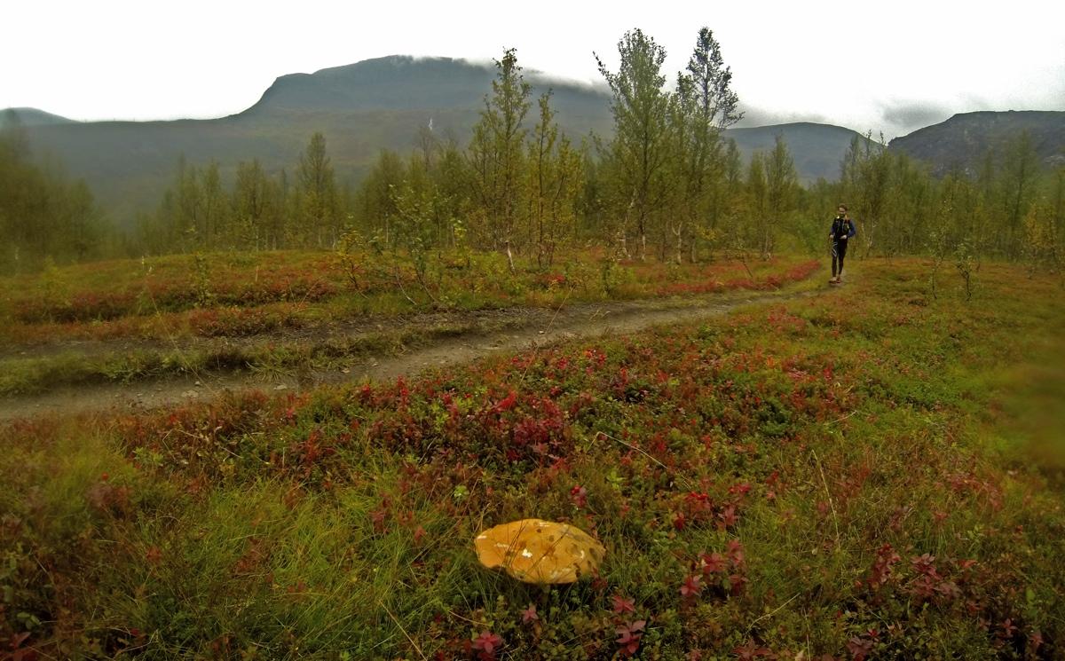 Pilze und Trails