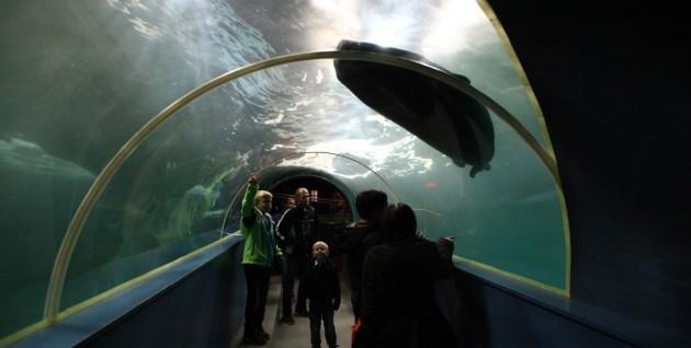 Polari Museum Robbenbecken