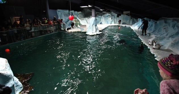 Polaria Museum Robben Fütterung