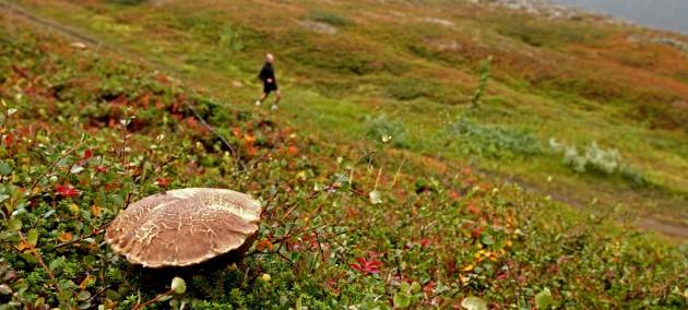 Tromso Skyrunning
