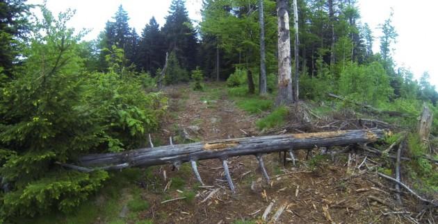 Parcour Trail mit Hindernissen