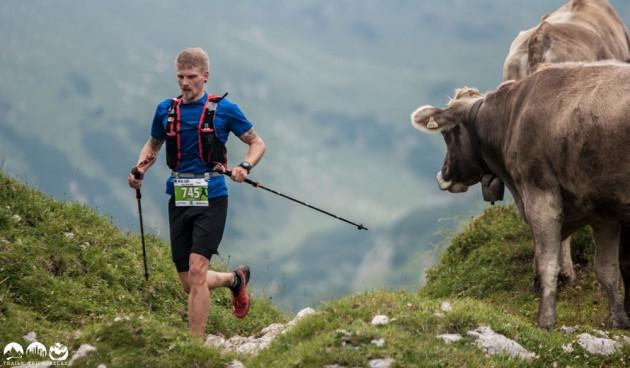 Trailrunner und die Kühe