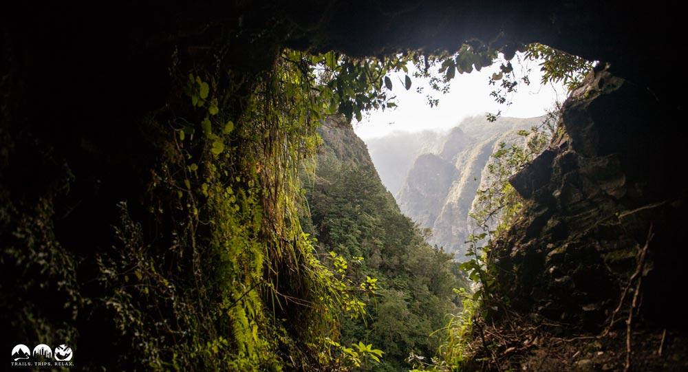 """Die """"Grüne Hölle"""" auf Madeira"""
