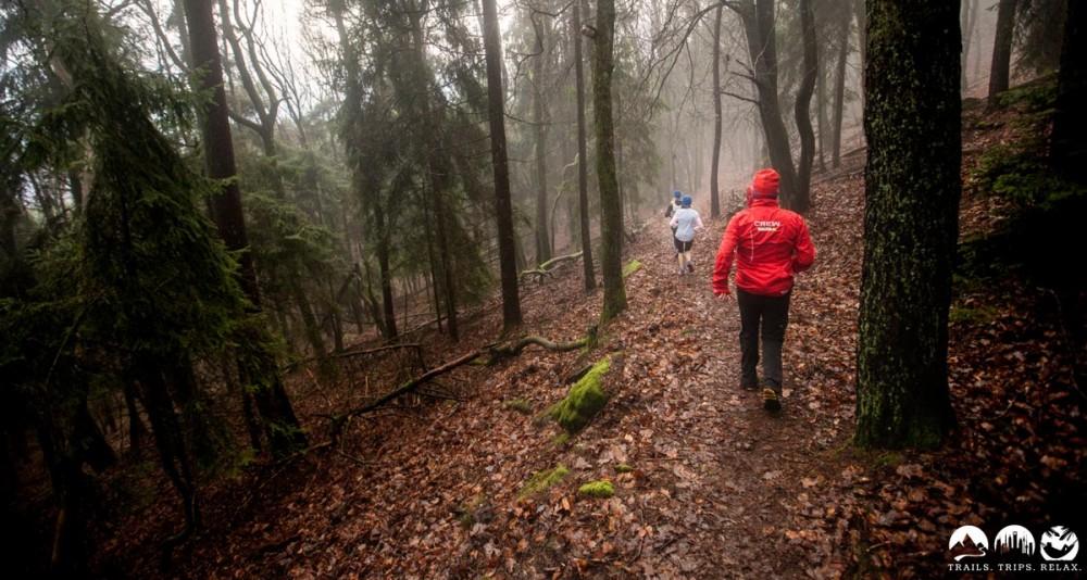 Schmale trails durch den Wald