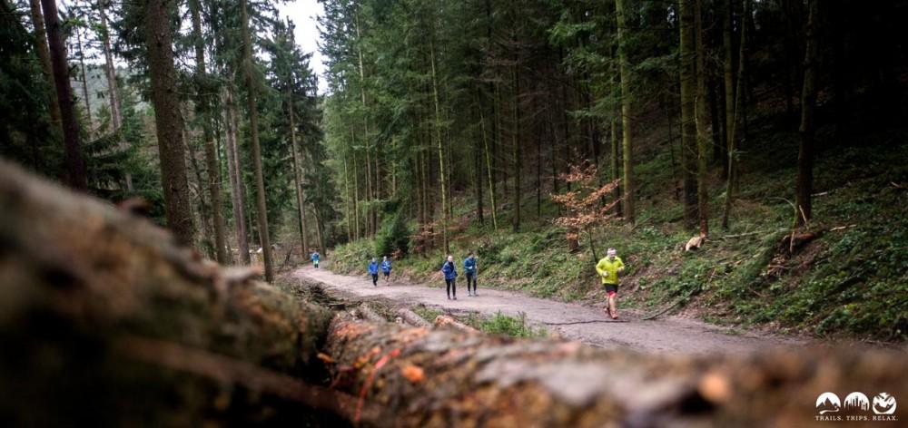 Auf den Forstwegen durch den Wald