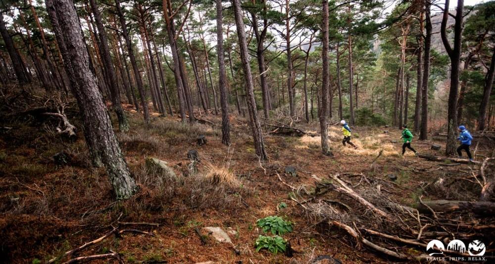 Beim Trail Magazin Revierguide Pfalz-Süd