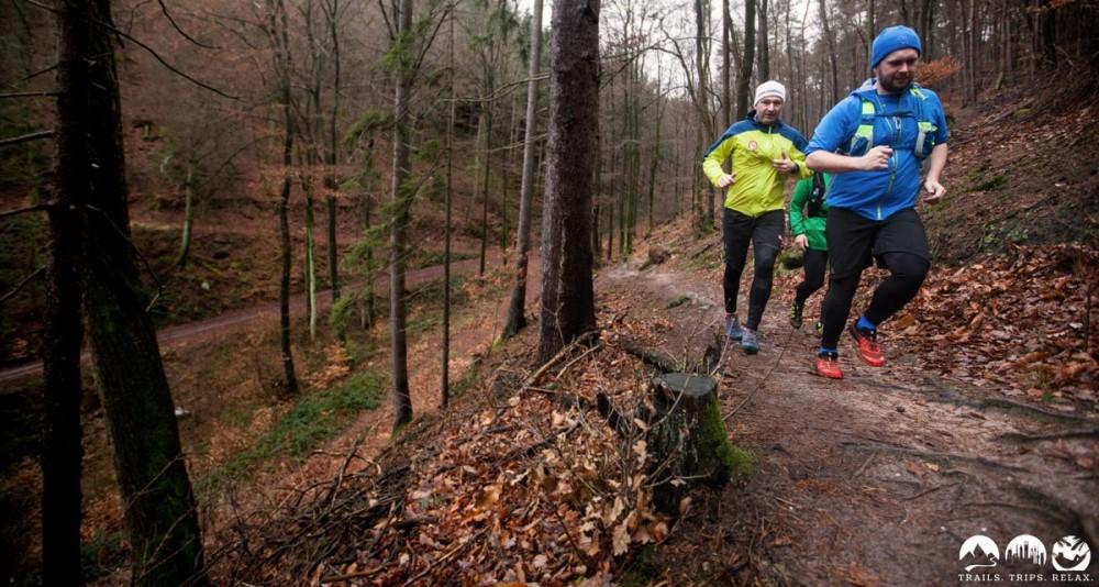 Wurzel-Trails im Pfälzerwald.