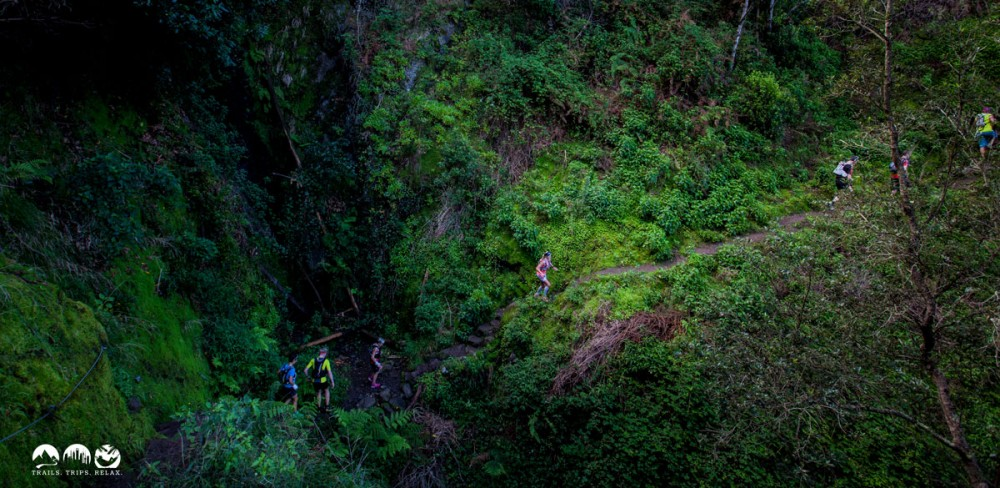 Madeira: 50 Shades of green