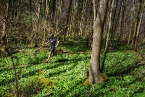 Bärlauch: Sinnes-Orgasmus für Läufer