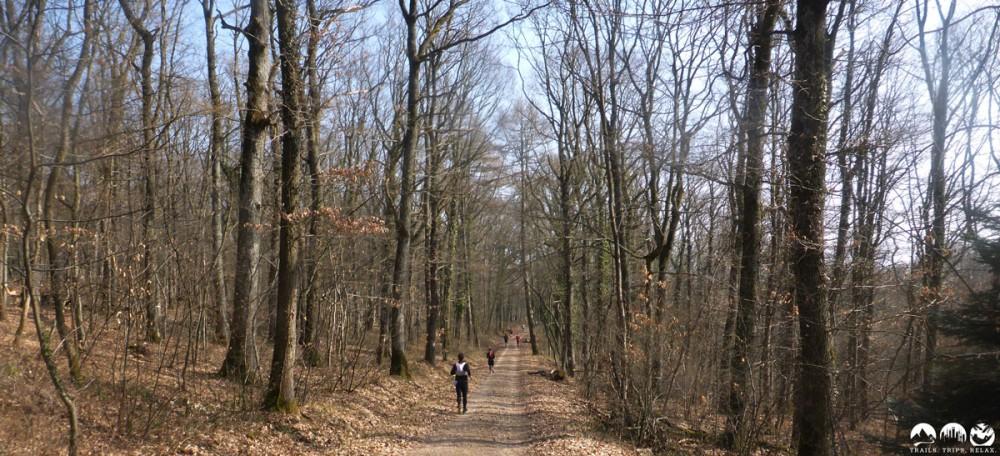 Forstwege - immer wieder zermürbend