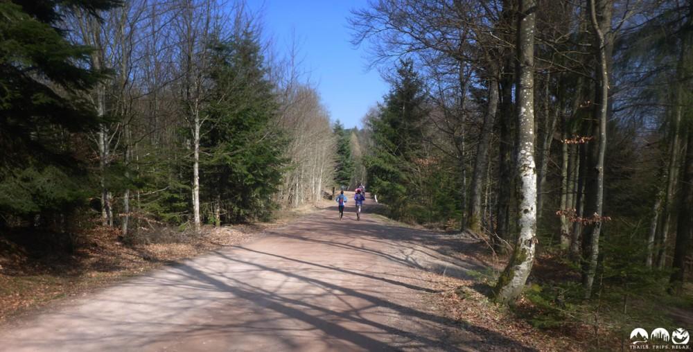Viele viele Forstwege
