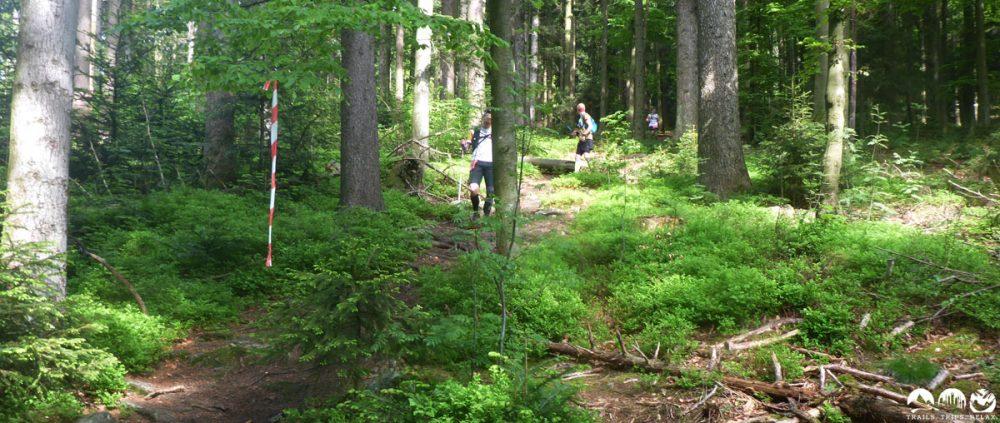 """Der lustige Downhill """"Worst Case"""" durch den Wald"""