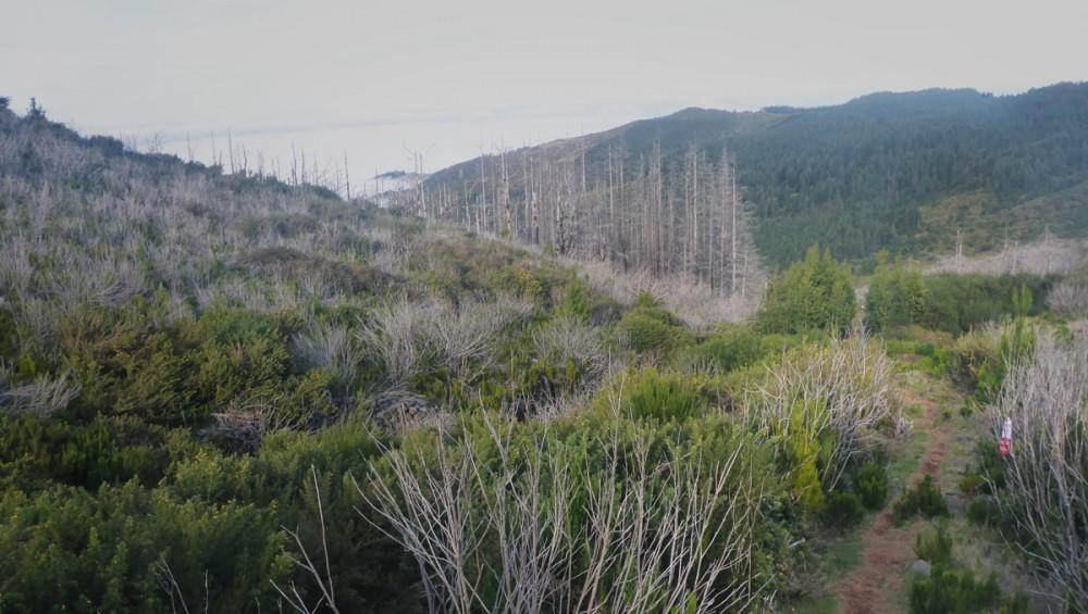 Downhill Richtung Ribeiro Frio