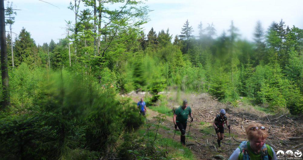 Auf dem Goldsteig durch die Wälder