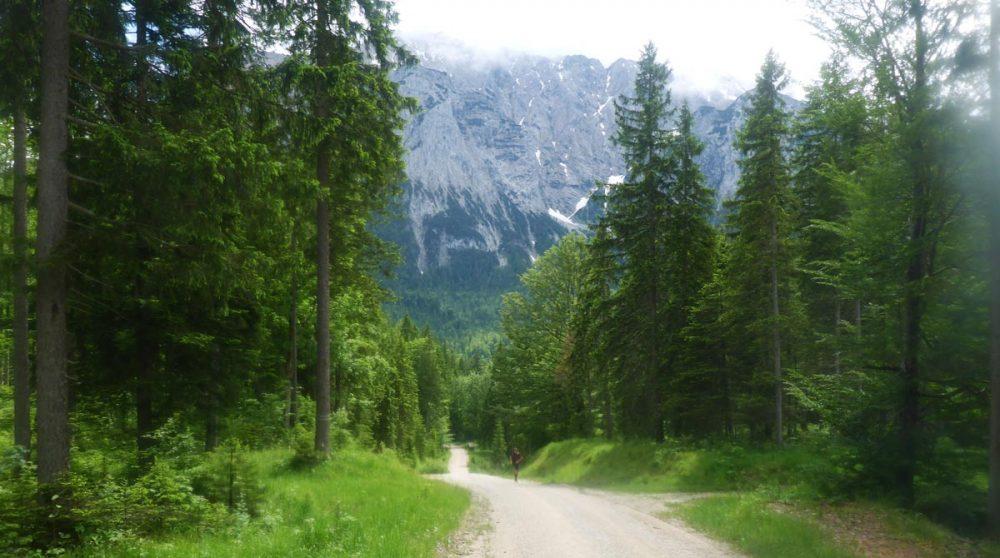 Neuer Abschnitt, immernoch Forstwege