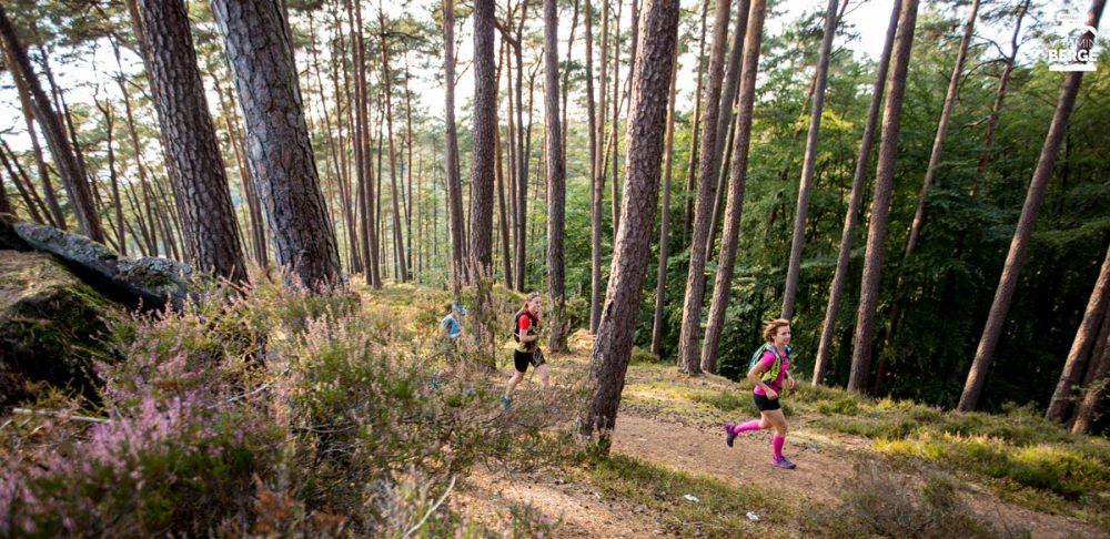 Trailrunning durch den Kiefernwald