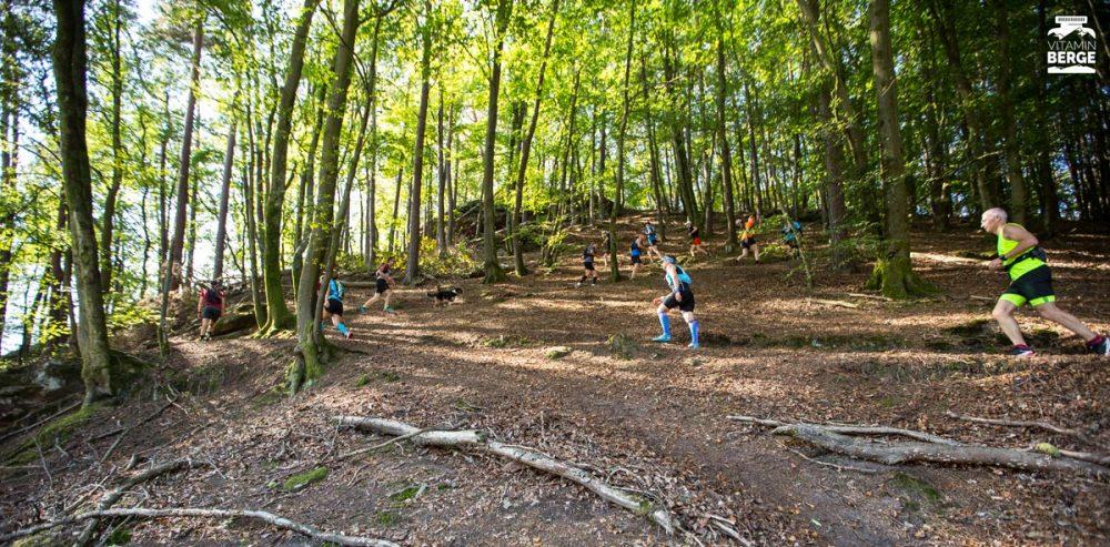 ZickZack geht es im Wald bergauf.