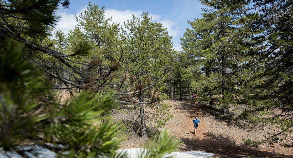 Im Wald auf weichen Trails