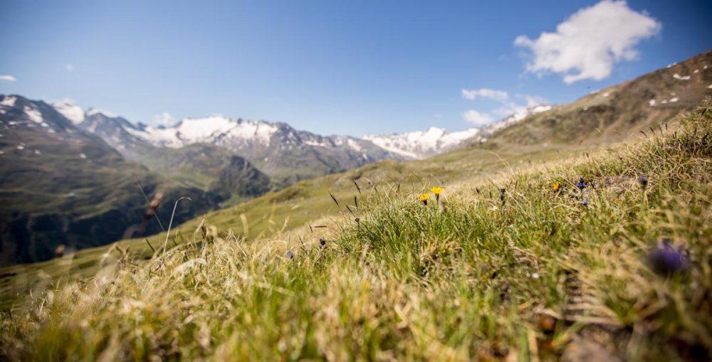 Bergwiese mit Panorama