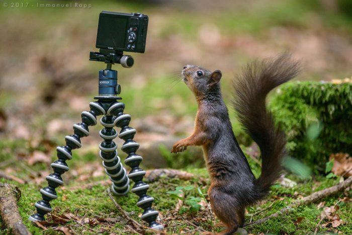 Eichhörnchen im Wald mit Kamera