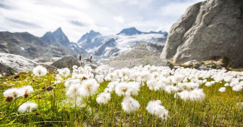050: Tipps gegen Bergweh