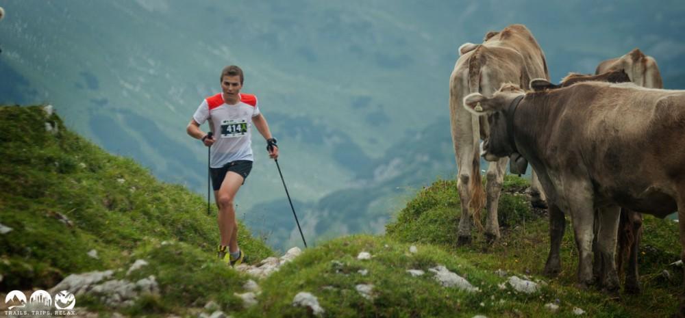 Kühe gehen immer!